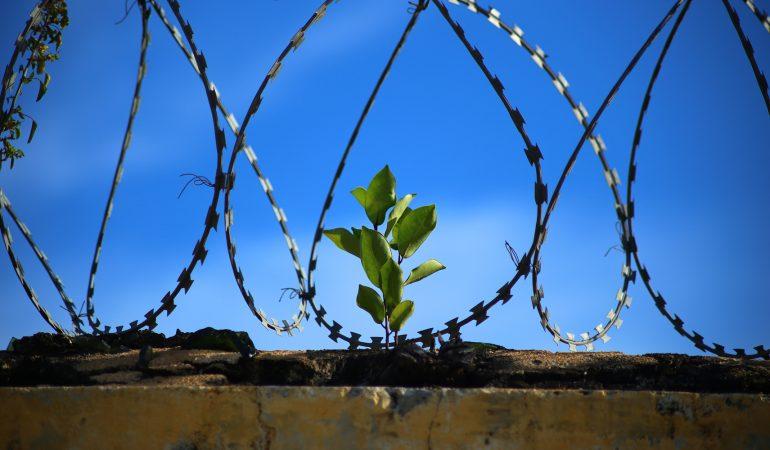 DES ÉTUDES BIBLIQUES REDONNENT DE L'ESPOIR AUX PRISONNIERS AUSTRALIENS