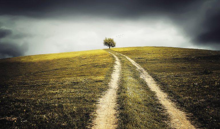 Chemin menant à un arbre sous un ciel obscur et nuageux