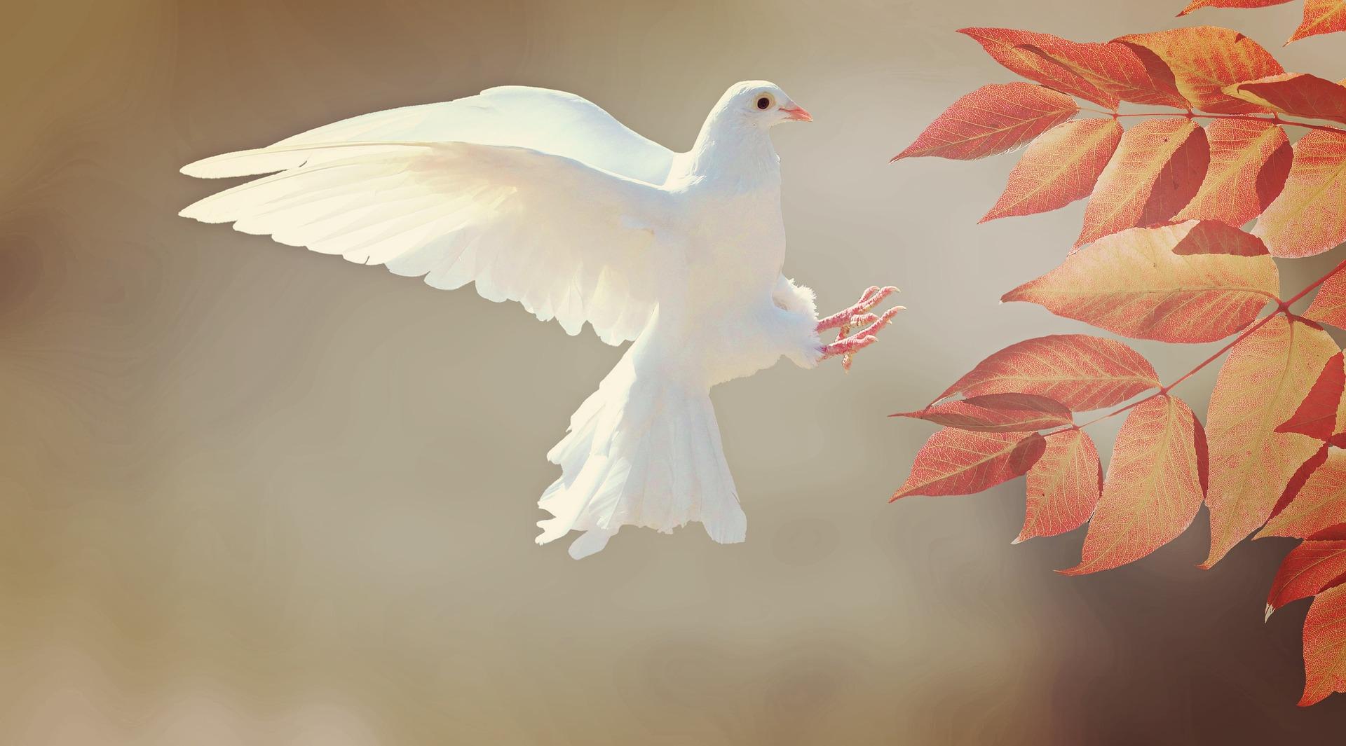 « SI NOUS NE PROTÉGEONS PAS LA LIBERTÉ RELIGIEUSE, NOUS NE LA MÉRITONS PAS »